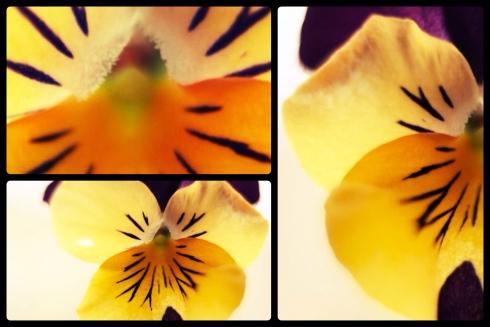 violet-collage_25231316936_o